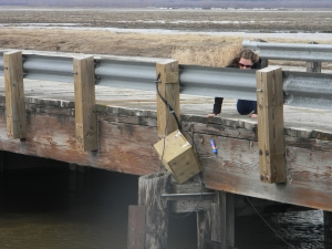 Catfish Creek Watershed, 29 April 2013 - Amber rescues flow metering equipment