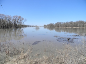 Near St Adolphe, MB, 3 May 2013 - The Seine River, overspilling its banks
